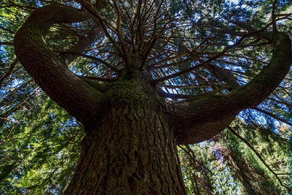 Strongest tree around